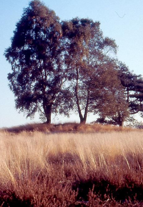 Hügelgräberheide Kirchlinteln